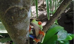 rainforest-tours-costa-rica