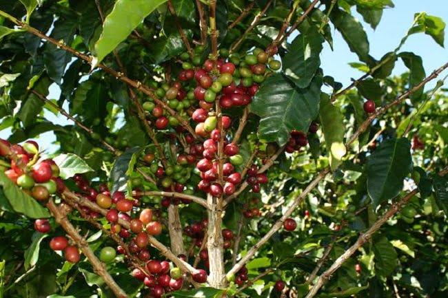 doka-state-coffee