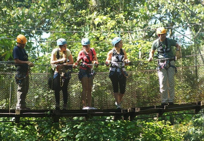 rainforest-hanging-bridges