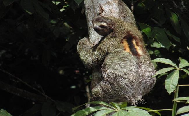 wildlife of tortuguero