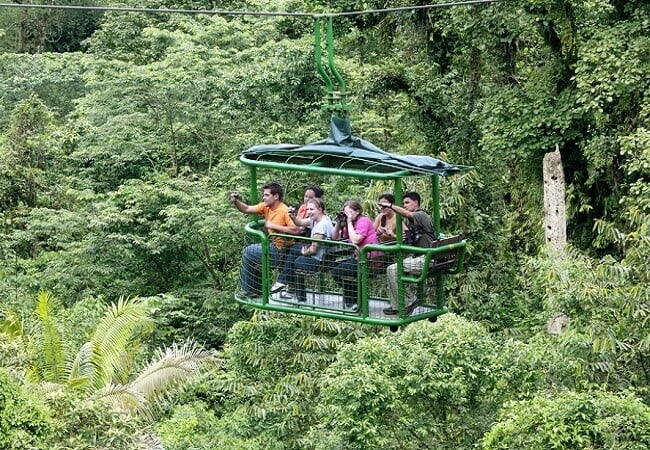rainforest-aerial-tram
