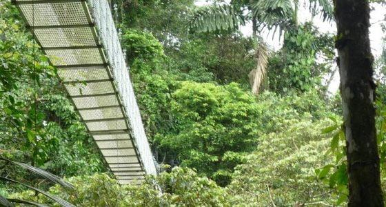 Arenal Hanging Bridges trip