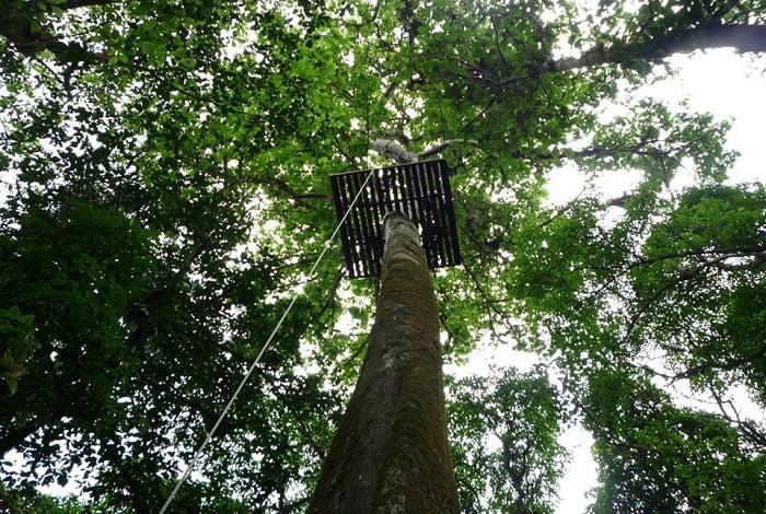 Canopy San Luis 9