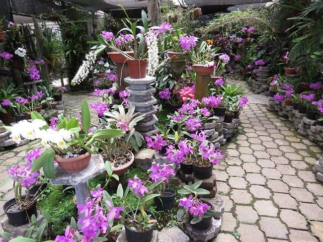 Jardín Lankester 2