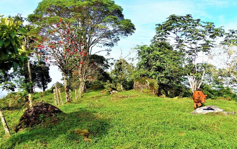 Properties for sale in Pérez Zeledón, Costa Rica